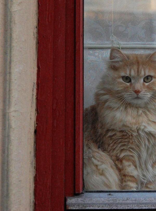 hvem-er-du-katt-i-vindu
