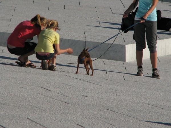 en-hund-etter-opera