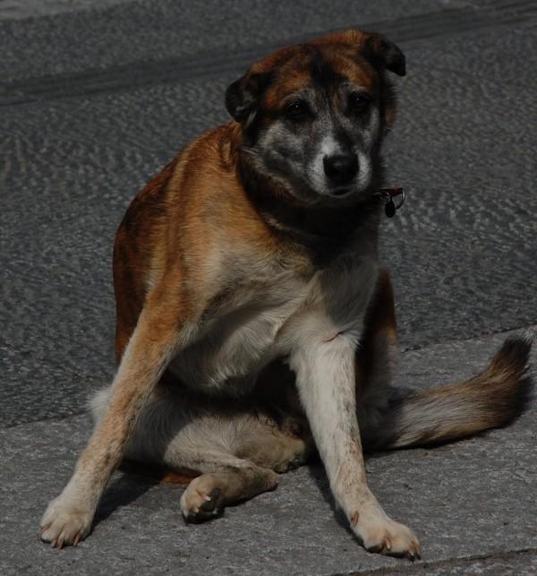 hund-som-ramler-pa-rompa
